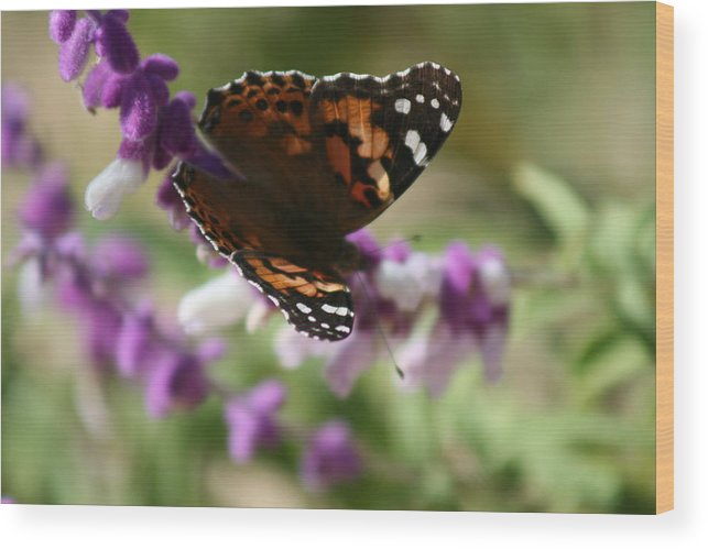 Butterfly Wood Print featuring the photograph Butterfly On Lavender II by Berta Barocio-Sullivan