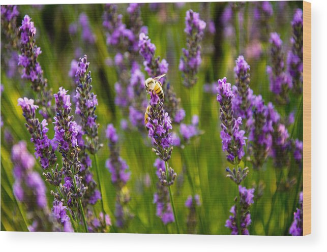 Purple Flowers Wood Print featuring the photograph Buzzin' Around by Rosemary Legge