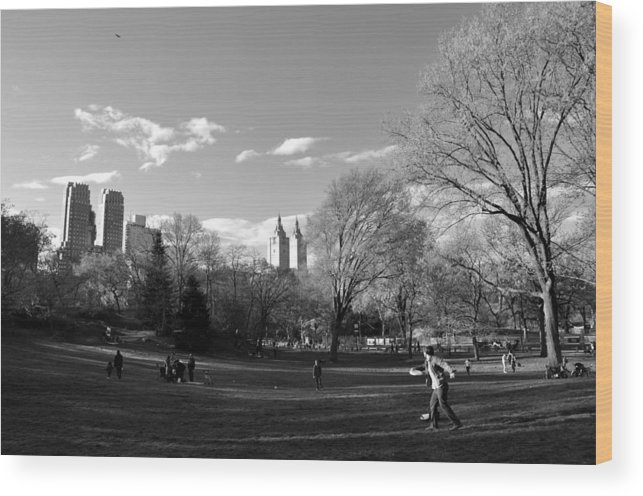 Frisbee Wood Print featuring the photograph Central Park by Andrew Dinh