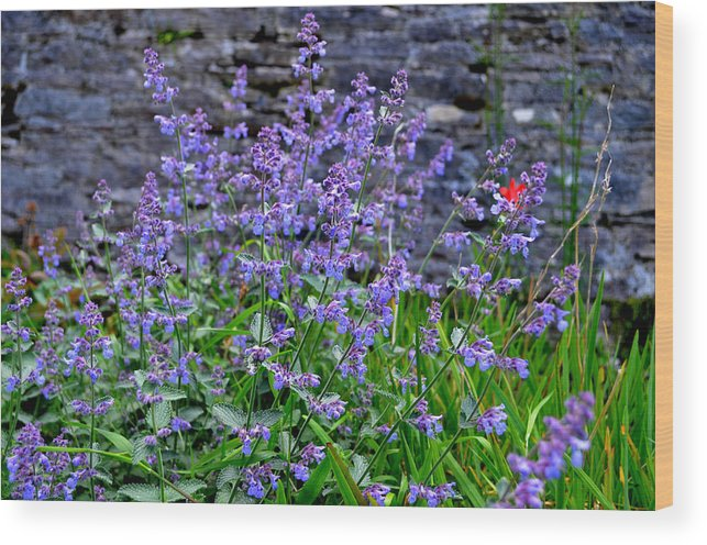 Flowers Wood Print featuring the photograph Colour Purple by Barbara Walsh