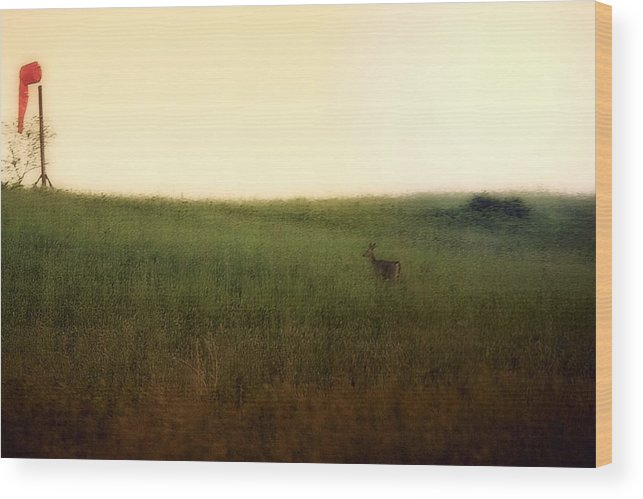Deeer Wood Print featuring the photograph Curious Deer by Darlene Bell