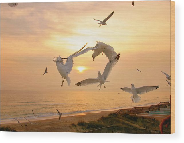 Seagulls Wood Print featuring the photograph Dancing Seagulls by Mary Almond