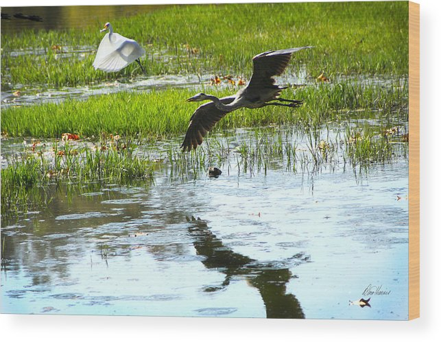 Two Herons Wood Print featuring the photograph Dark Shadow by Diana Haronis