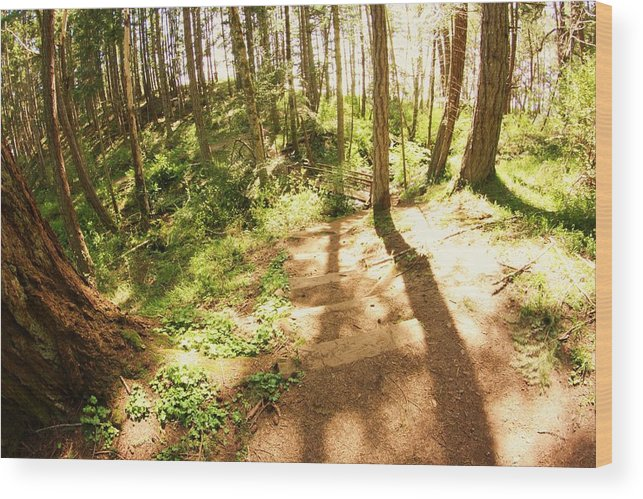 Forest Wood Print featuring the photograph Devonian Park Pathway by Erica Rieger