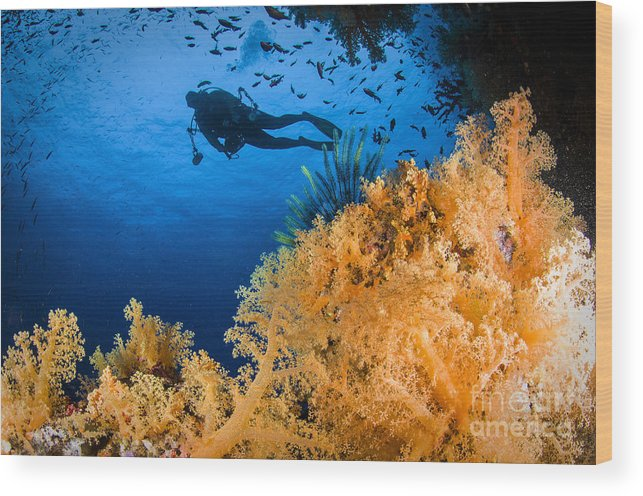 Crinoid Wood Print featuring the photograph Diver Swimms Above Soft Coral, Fiji by Todd Winner