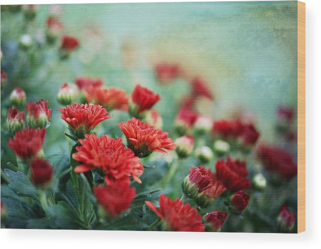 Mums Wood Print featuring the photograph Dreamy Red Mums by Charrie Shockey