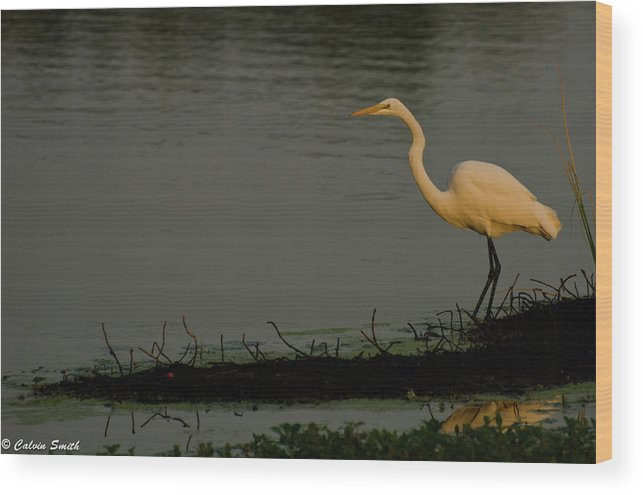 Wood Print featuring the photograph Egret Sunrise by Calvin Smith