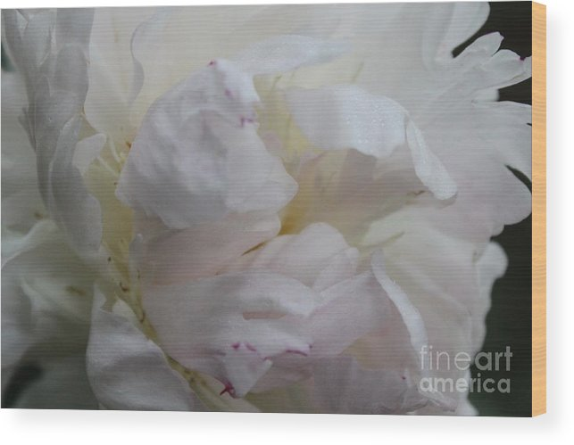Flower Wood Print featuring the photograph Elegance And Frills by Terri Thompson