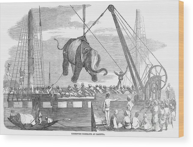 1858 Wood Print featuring the photograph Elephant Hoist, 1858 by Granger