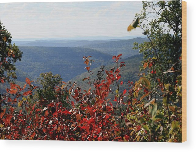 Ozarks Wood Print featuring the photograph Fair View by CGHepburn Scenic Photos