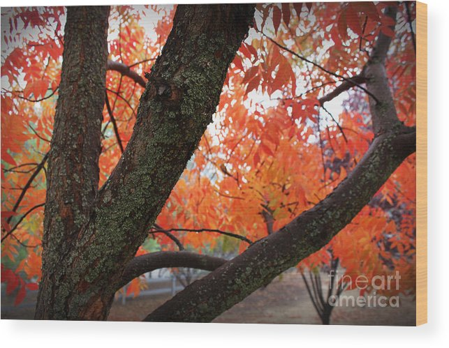 Fall Wood Print featuring the photograph Fall Branches by Leslie Kinney
