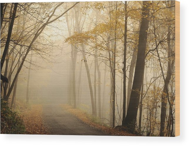 Beaver Creek State Park Wood Print featuring the photograph Fall by Juanita L Ruffner