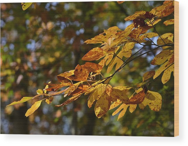 Nature Wood Print featuring the photograph Fall Leaves Part One by Al Cash