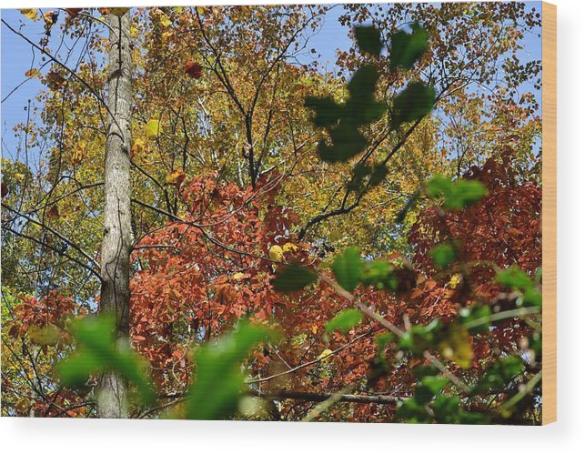 Nature Wood Print featuring the photograph Fall Leaves Part Two by Al Cash