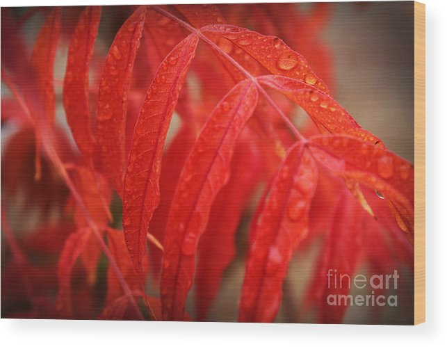 Bright Wood Print featuring the photograph Fall Leaves Red 3 by Leslie Kinney