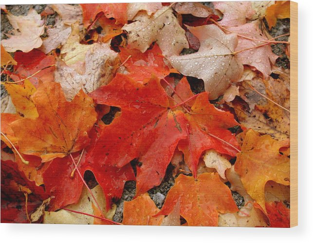 Fall Wood Print featuring the photograph Fall Leaves by Suzanne DeGeorge