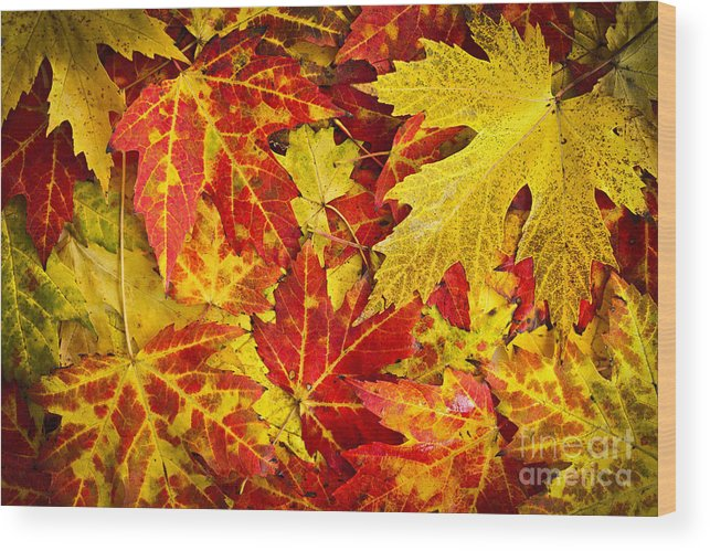 Leaves Wood Print featuring the photograph Fallen Autumn Maple Leaves by Elena Elisseeva