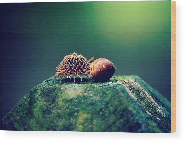 Acorn Wood Print featuring the photograph Falling For You by Robin Dickinson