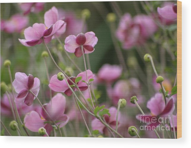 Floral Wood Print featuring the photograph Field Of Japanese Anemones by Living Color Photography Lorraine Lynch
