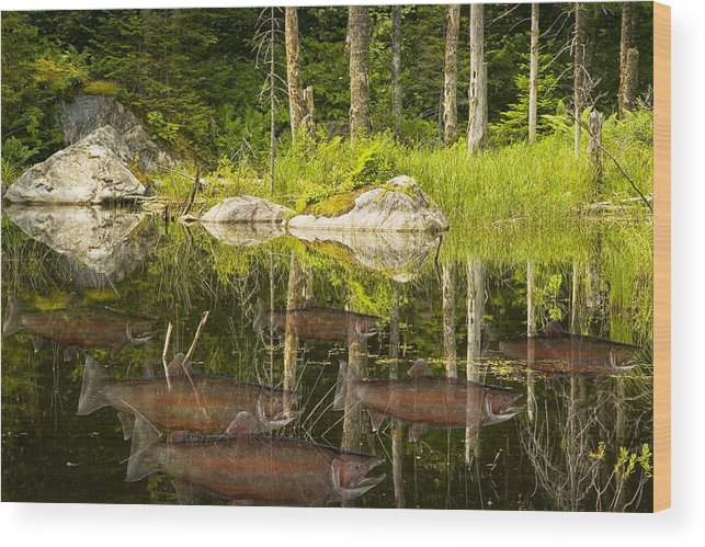 Art Wood Print featuring the photograph Fisherman's Dream Trout Pond by Randall Nyhof