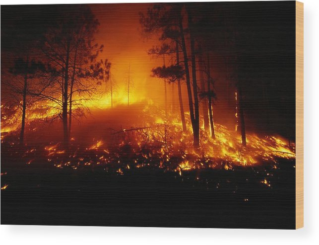 united States Wood Print featuring the photograph Flames From A Forest Fire Light by Raymond Gehman