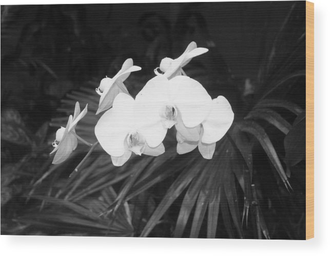 Flower Wood Print featuring the photograph Flower by Robyn Combs