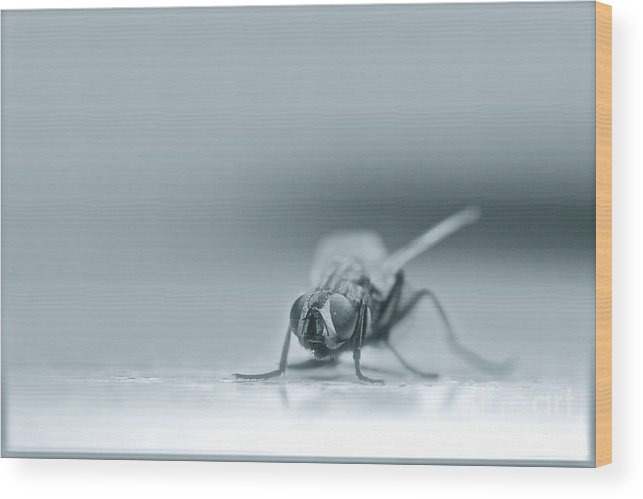 Insect Wood Print featuring the photograph Fly Waiting by Lewis Bonner