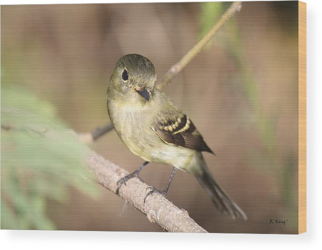 Roena King Wood Print featuring the photograph Flycatcher On A Branch by Roena King