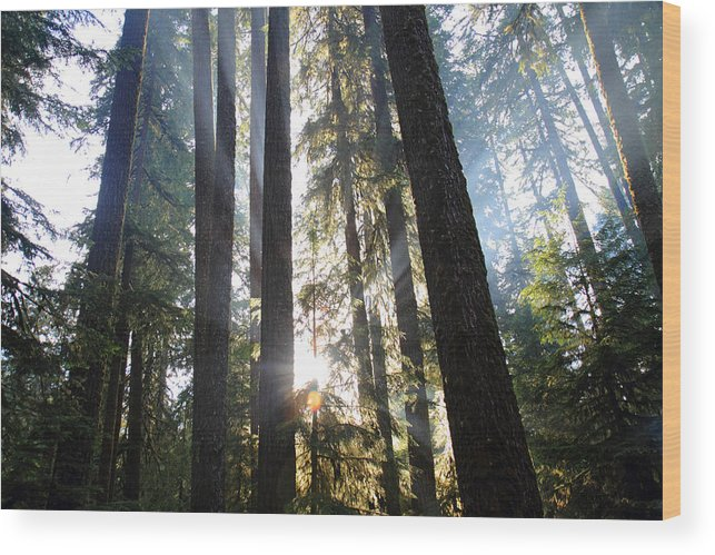 Olympic Wood Print featuring the photograph Forest Sun Rays In Olympic National Park by Pierre Leclerc Photography