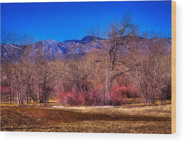 Denver Wood Print featuring the photograph Furrowed Field At South Platte Park by David Patterson