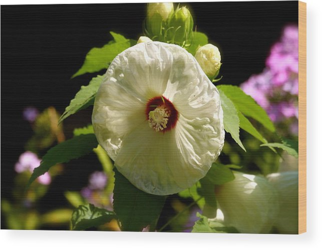 Floral Wood Print featuring the photograph Giant Flower by Mike Stouffer