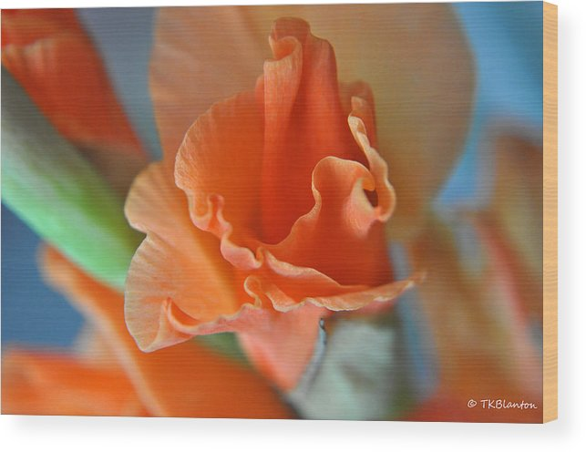 Teresa Blanton Wood Print featuring the photograph Gladiola Bloom by Teresa Blanton