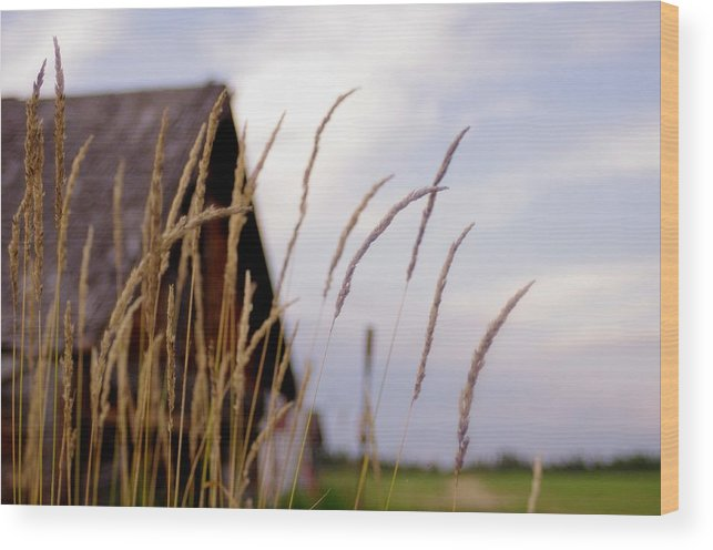 Farm Wood Print featuring the photograph Glancing Back At A Memory by Kelly Reich