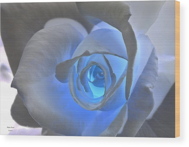 Rose Wood Print featuring the photograph Glowing Blue Rose by Phyllis Denton