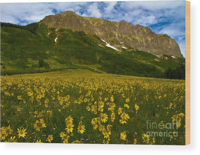 Abundance Wood Print featuring the photograph Gothic Mountain by Crystal Garner
