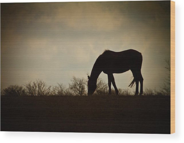 Grazing Wood Print featuring the photograph Grazing by Paul Roach