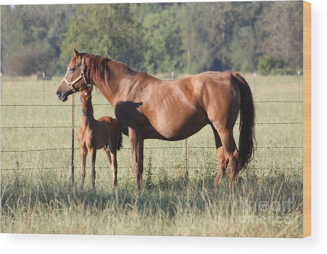 Horses Wood Print featuring the photograph Hangin' Out by Douglas Cloud