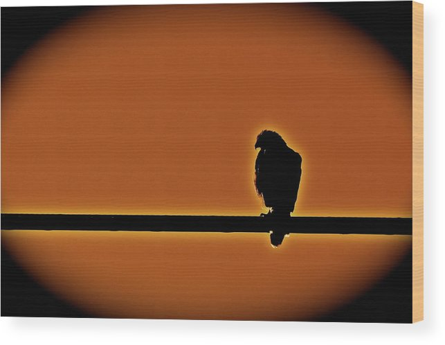 Birds Wood Print featuring the photograph Hawk by Diana Hatcher