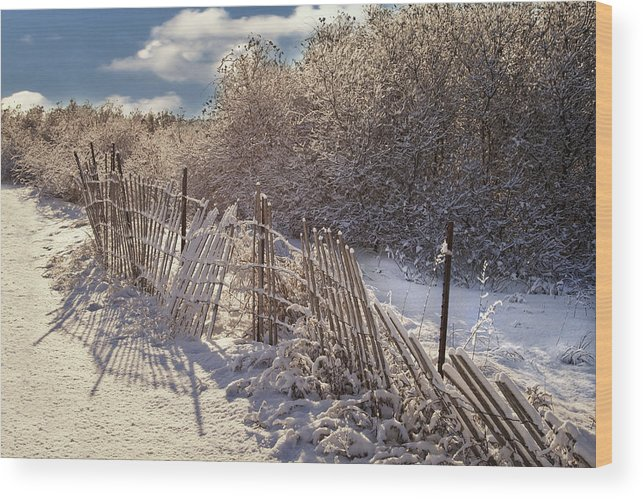 White Wood Print featuring the photograph In Winter's Chill by Yelena Rozov