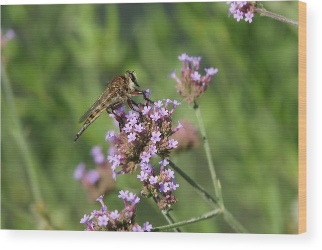 Insect Wood Print featuring the photograph Insect And Flower by Alan Hutchins