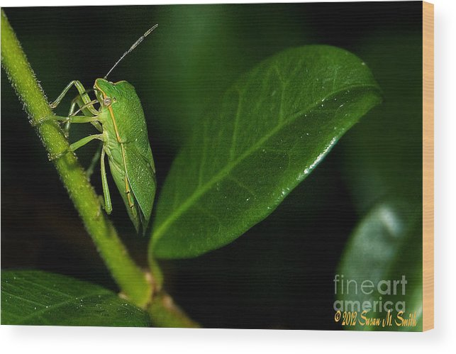 Photography Wood Print featuring the photograph Leaf Me Alone by Susan Smith