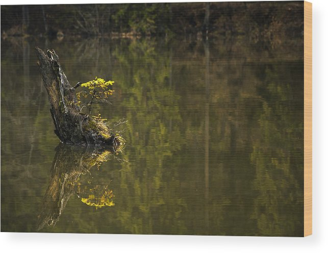 Water Wood Print featuring the photograph Little Tree by Catalin Palosanu