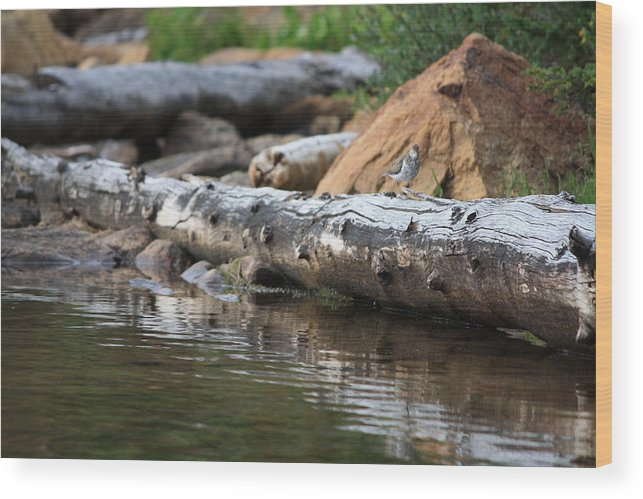 Landscape Wood Print featuring the photograph Log On The Lake by Jackie Easthouse