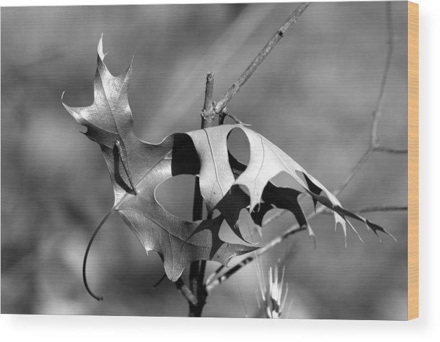 Leaf Wood Print featuring the photograph Lone Leaf by Rick Rauzi