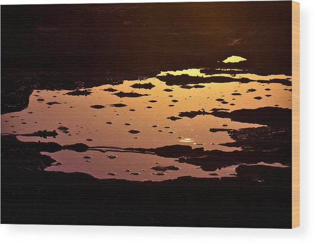 Longreef Wood Print featuring the photograph Long Reef Golden Pond by Tony Irving