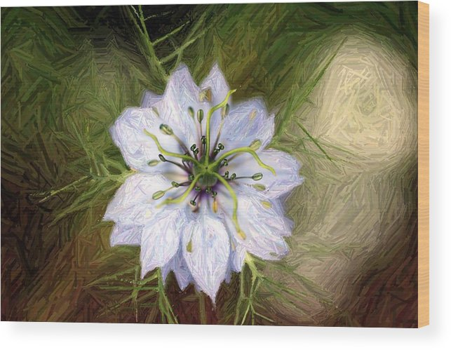 Love In A Mist Wood Print featuring the photograph Love In A Mist by Shiladitya Sinha
