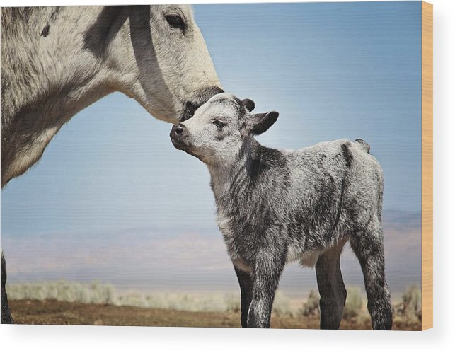 Cow Wood Print featuring the photograph Mama Love by Megan Chambers
