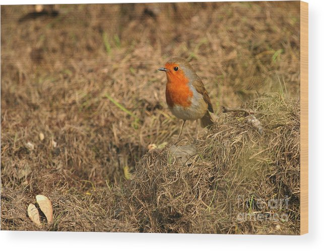 Robin Wood Print featuring the photograph Meeting by Szalonaisa Photography