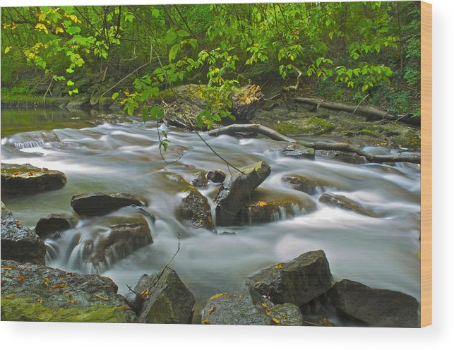 Creek Wood Print featuring the photograph Mystic Creek by Michael Pope