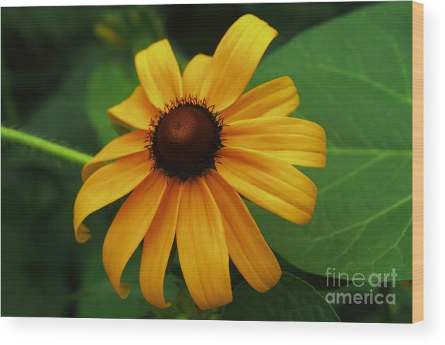 Flower Wood Print featuring the photograph Ode To Summer by Marjorie Imbeau